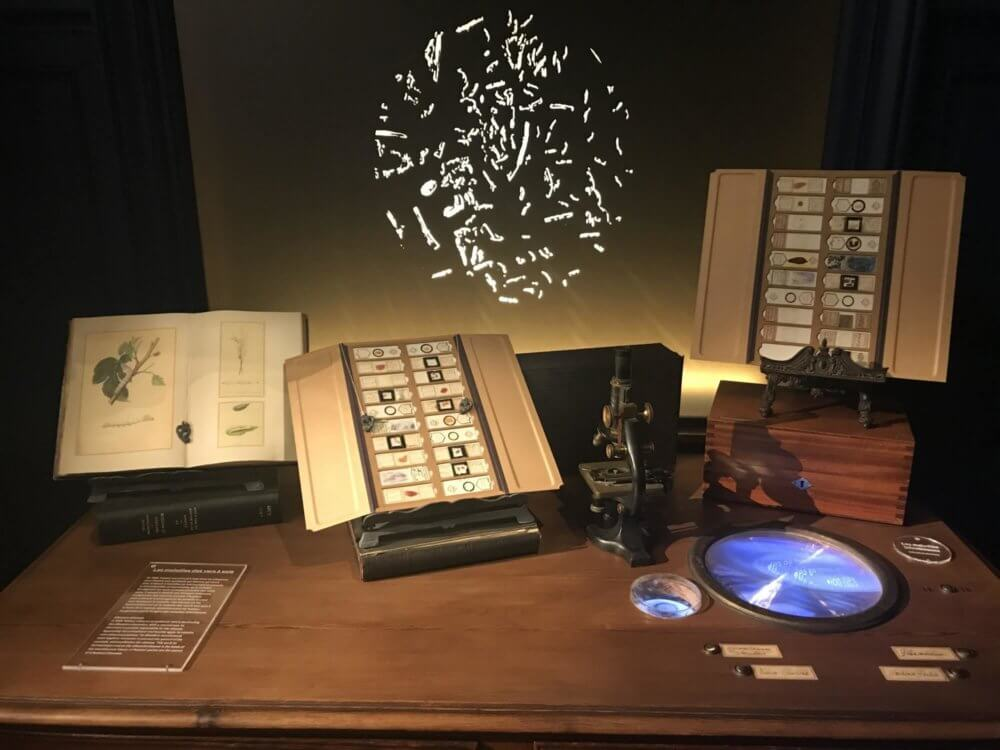 Lille Musee Pasteur