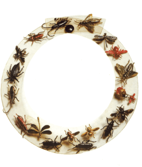 collier rodhoide insectes